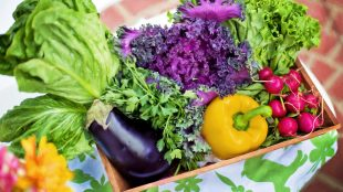 dieta vegetariana per persone affette da patologie renali