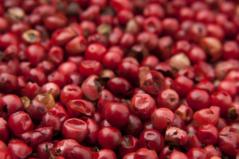 Bacche di goji pianta coltivazione e cura for Coltivazione goji