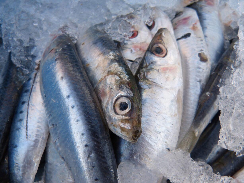 Pesce Azzurro Impara A Riconoscerlo Da Quello Bianco